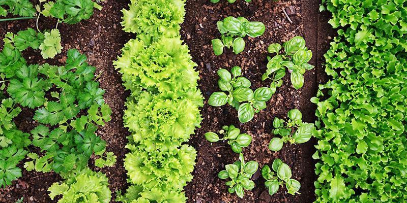 L'ecologia della nutrizione. Nutrirsi come Natura consiglia