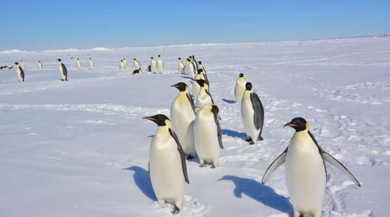 Antartide terra di pace e di scienza