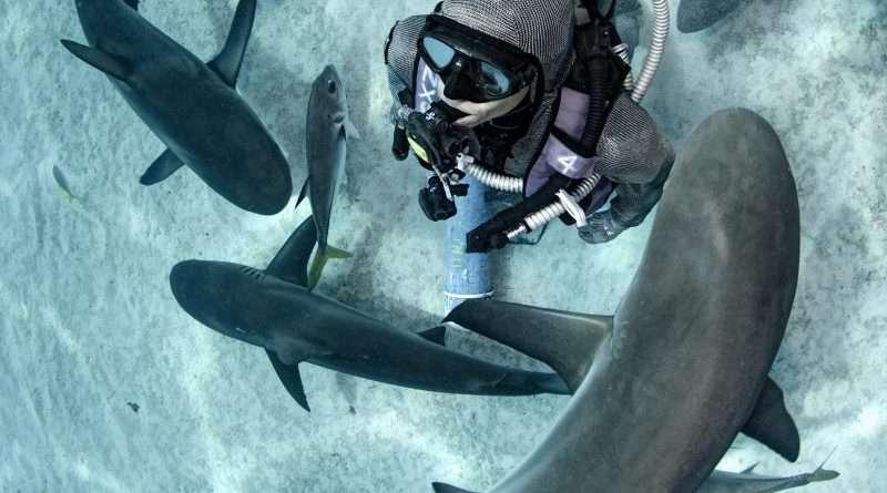 Cristina Zenato, l'ambasciatrice degli squali