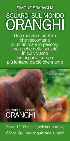 sguardo sul mondo oranghi