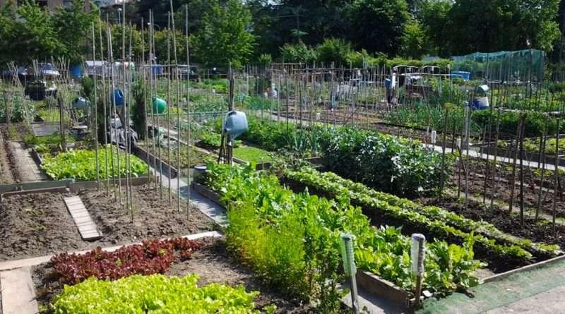 Organizzare un orto