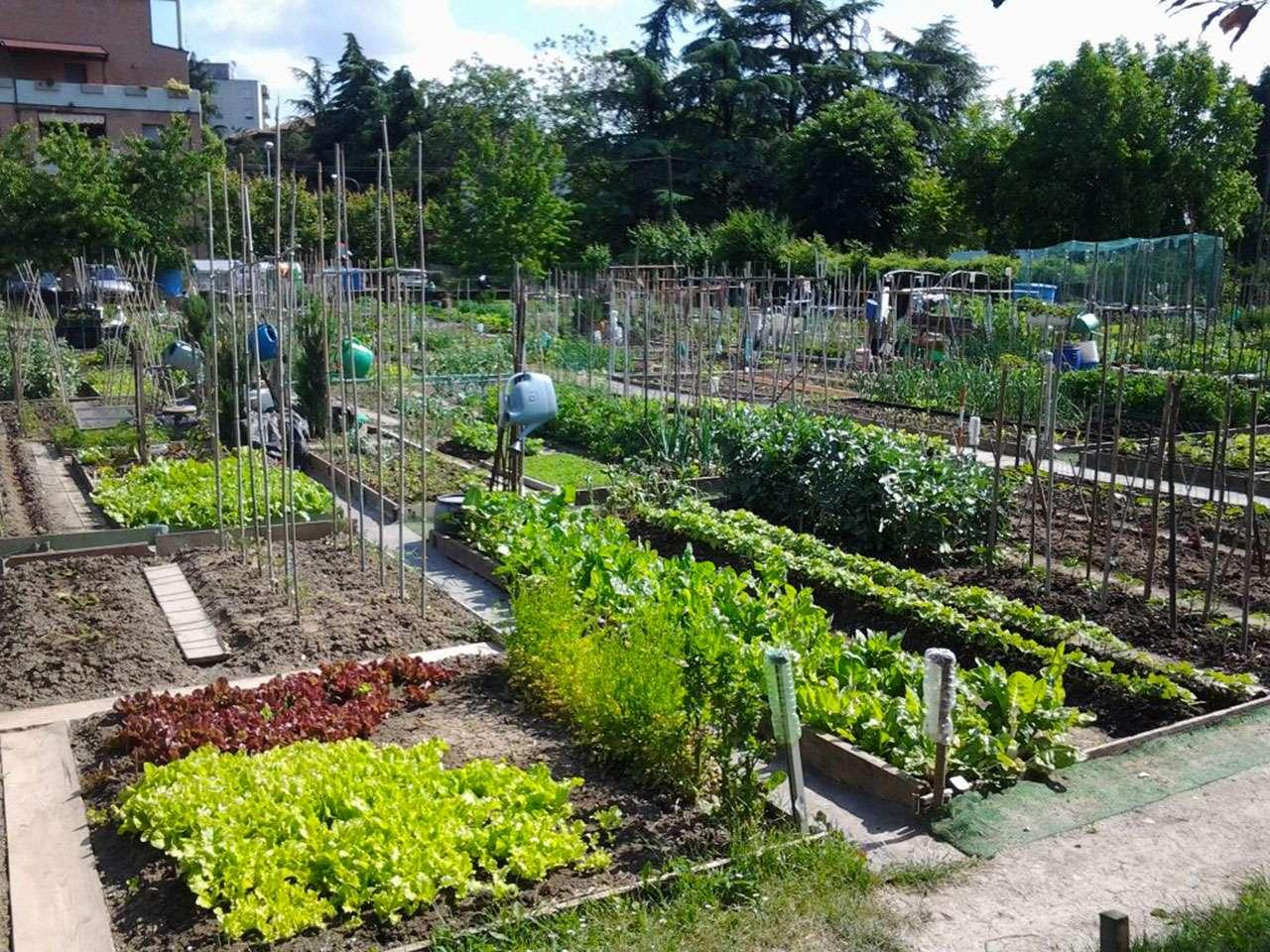 Orto come e quando organizzazione il nostro terreno for Organizzare giardino