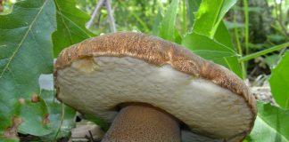 come si riproducono i funghi