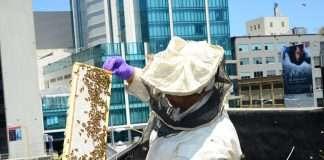 apicoltura in città