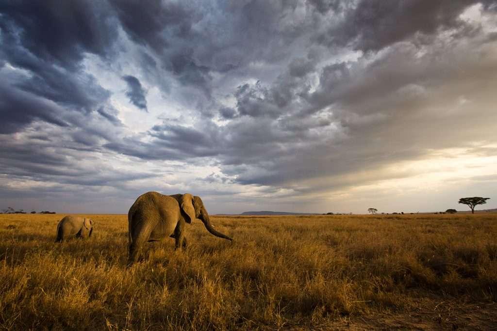 Itinerario d'Africa